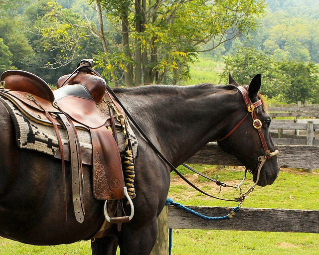 Sedlo pro koně