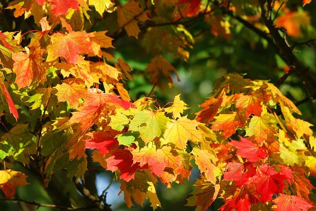 krása podzimu